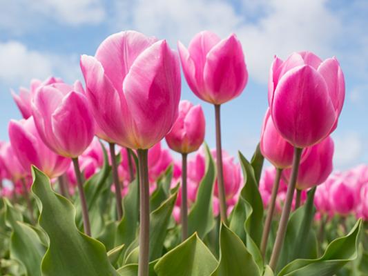pestrofarebné jarné kvety