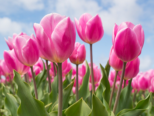 pestrobarevné jarní květiny